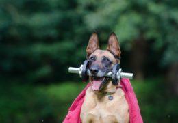 Filozofia fit – sposób na zdrowie i długowieczność